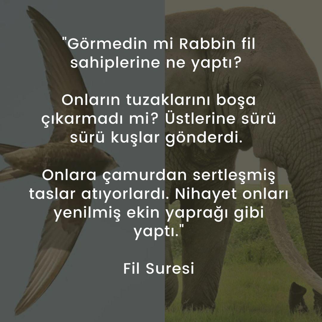 Fil Suresi Türkçe Meali