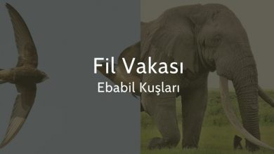 Photo of Fil Vakası, Ebabil Kuşları, Fil Suresi
